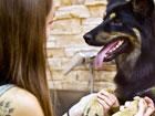 PAW psí wellness salón salón